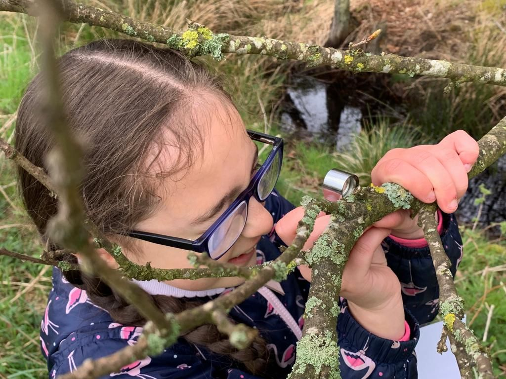 A Pupil examining lichen on the branches